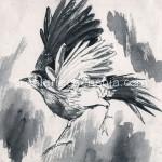 鸟 毛笔、墨 15cm x 15cm 纸本手绘 1992年_副本